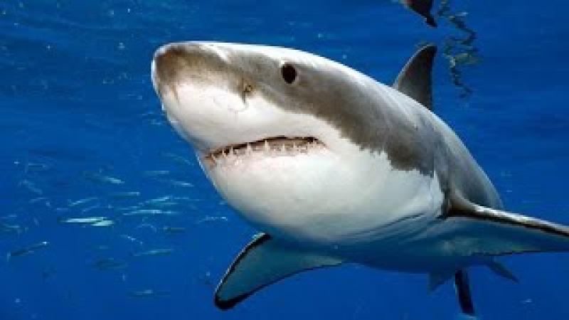 Акула по кличке Николь (Документальные фильмы, передачи HD) » Freewka.com - Смотреть онлайн в хорощем качестве