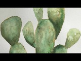 Speed Painting  Prickly Pear Cactus  Watercolor