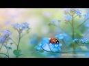 Нежные цветы от Jacky Parker.Музыка из коллекции Airich.