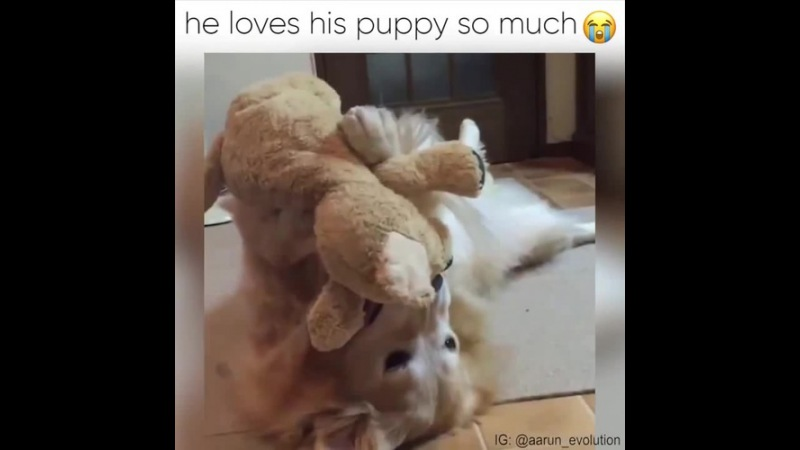 Dog loves his puppy so much