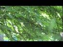 Донецк 26 05 14 Аэропорт у ТЦ Метро Ополченцы ведут бой с фашистами Ukraine Donetsk