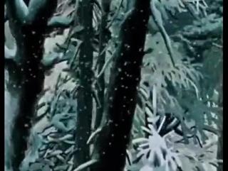 Слушаем Моцарта в Новый год (Моцарт. Маленькая ночная серенада)