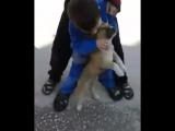 [Кавказский Переулок] Вот она любовь к животным