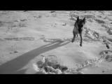 Это видео посвящается одной из самых лучших собак по кличке Джесси.