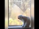 Ну впусти меня! Я больше не буду тебя обижать...