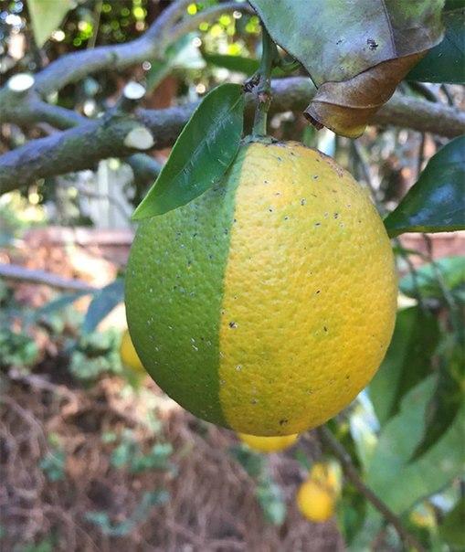 Даже если этот #плод невкусный, он все равно #прекрасен!