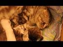 кошка ругает котенка, воспитание.