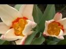 Супер Красивая музыка пчел и цветы для моих друзейCamtasia Studio 8 монтаж♥DIY♥Идеи ру...