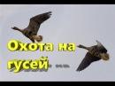 Охота на гусей с манками и профилями часть 2