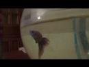 Оказываеться рыбки тоже знают суть мультфильма Мия и я XD