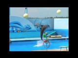 Дельфины - люди моря