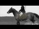Биомеханика работы спины лошади.