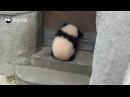 All possible. Ethan Panda Hunt.