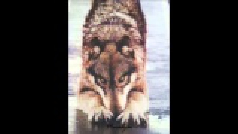 Блатной Удар Одинокий волк текст