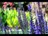1 Hour Relaxing Nature Sounds With Gentle Piano Music River Sound, Birdsong