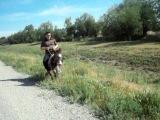 Езда на ишаке ( Ауди ) Driving on the donkey ( Audi )
