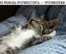 Тимофей Гречко фото #36