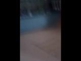 hamsterхомяк
