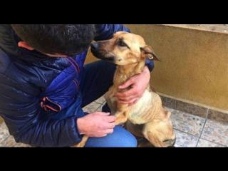 В Испании спасли от смерти ужасно истощенную собаку