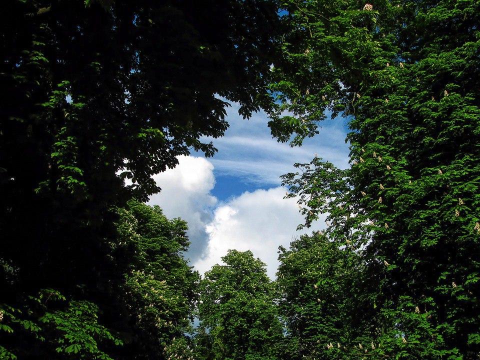 В рамках программы «Миллион деревьев» в СВАО будет высажено 5000 деревьев и кустарников