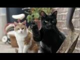 Очень смешная реклама с котами)