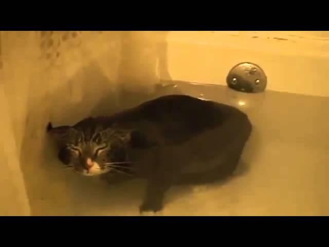 005. Кот мяучит в ванне