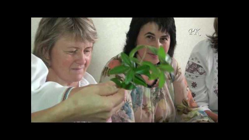 Вінок молодого - Коломия (Жуківський звичай)-Wreath young (Zhukovskiy rite)