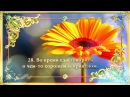 40 забытых сунн Посланника Аллаха ﷺ