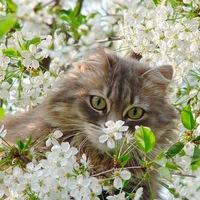 Картинки клевые про весну