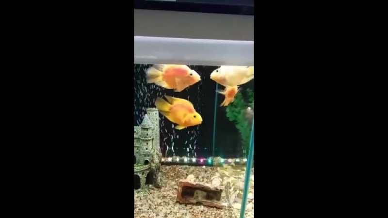 рыбки целуются💋🐟🐠🐡