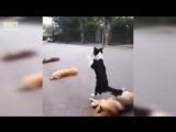 Хорошая собачка