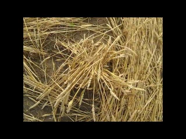 Crop circles near the village of Hul Slovakia 2007-2012