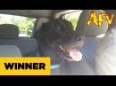 Park Bound Pooch AFV Prize Winner AFV