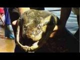 Giant Anaconda - Giant Snake - Largest Snake - Longest Snake - Biggest Snake