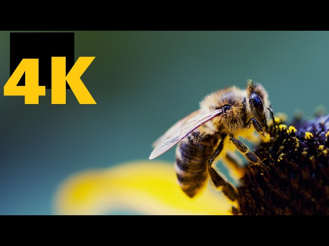 4K Video Relaxing Ultra HD TV Test 2160p 20 minutes