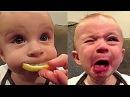 İlk kez Limon Yiyen Bebekler 2017 (HD) 😹 [Komik Bebek Videoları]