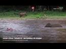 Слон спас своего человека из воды