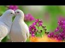 Пусть миром правит любовь очень красивое видео
