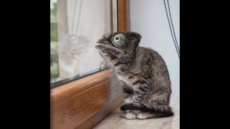 Strange Animal Hybrids Bred In Photoshop