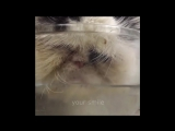 КОТЫ ПРИКОЛЫ 2016 Лучшие Приколы с котами Funny Cats Complation 2016