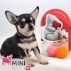 Клуб Mini-Dogs Модные Маленькие Собачки