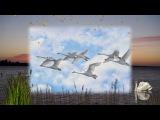 Белые лебеди поет Виктор Ворожцов