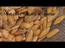 Дыня Сбор семян и применение их для здоровья