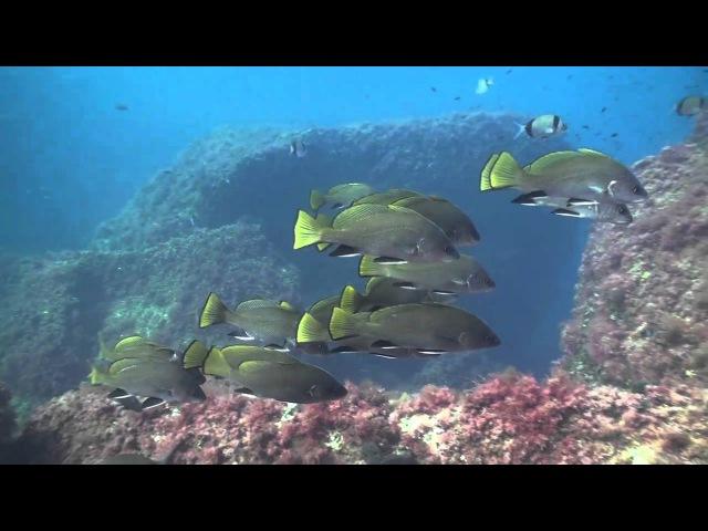Rivemar La Azohia Dive center