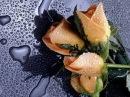 Три Чайных Розы, Красивые Песни о Любви, Светлана Тернова music