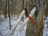 ТОПОРЫ (2) Тренировка Лесной стенд Март 2017