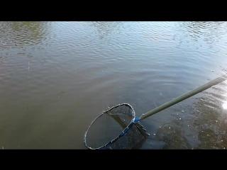 Рибалка с.Надросівка рибальське господарство (Срібні Роси)