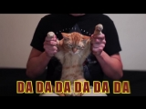 Dubstep Cat - Hellcat