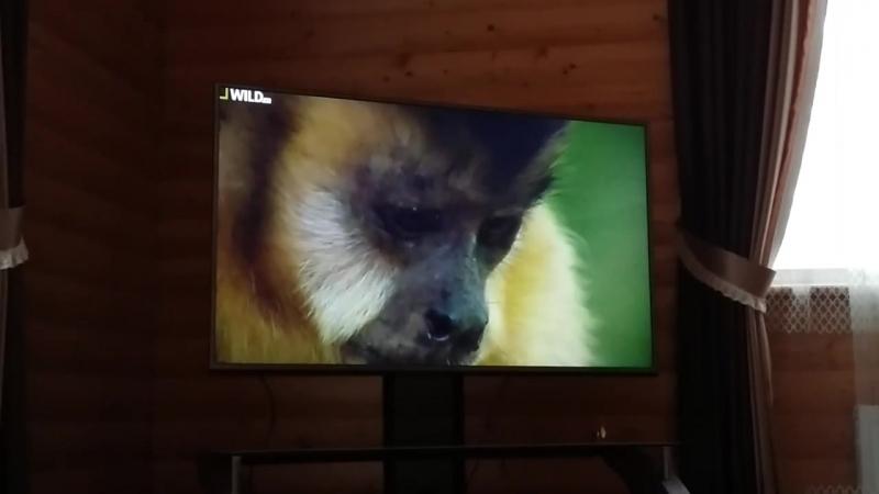 Залипаю в природу дикой Бразилии))