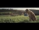 Социальная реклама о приютах: Вас ждут! Dogs Trust TV Ad #specialsomeone long version